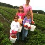 Strawberry Picking in Brooksville