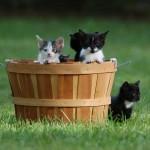 Our Litter Of Kittens