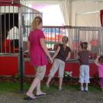 daytona-500-2012-budweiser-horses